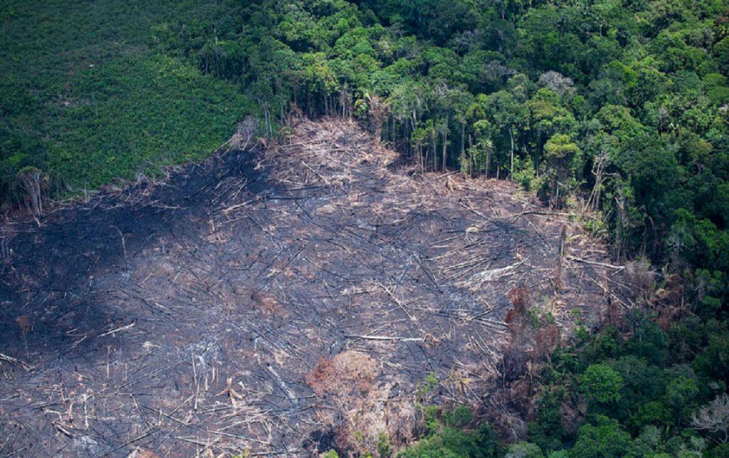 Desmatamento da Amazônia com Bolsonaro visa a grilagem, aponta dirigente do MST
