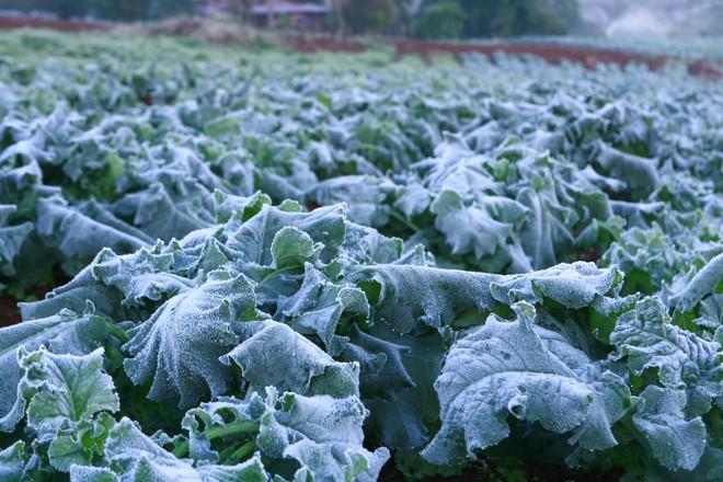 Onda de frio pode gerar perdas na produção de alimentos e aumentar a fome