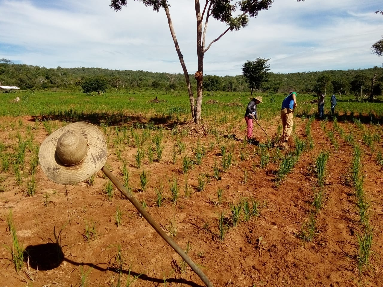 Por dentro do Cerrado: experiência produtiva do 2º maior bioma da América do Sul